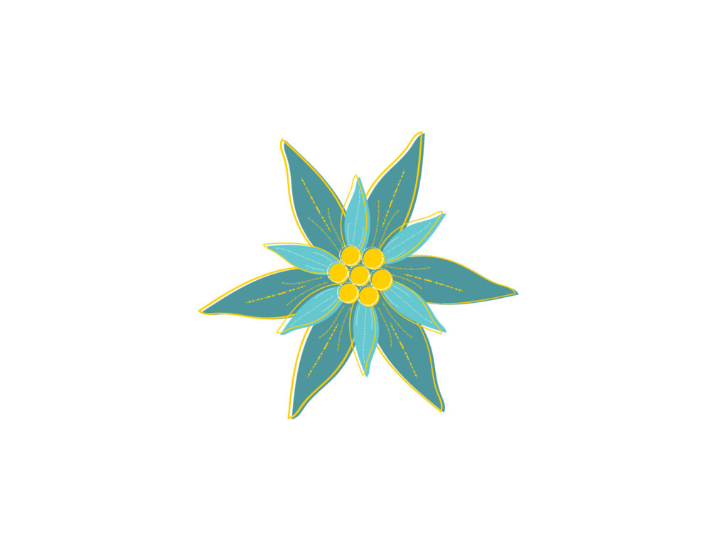 Edelweiss Graphic Illustration in Teal and Gold